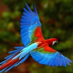 Colored-parrot-flying-over-the-nature-HD-wallpaper_5120x3200