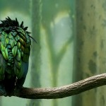 green_colored_bird-HD